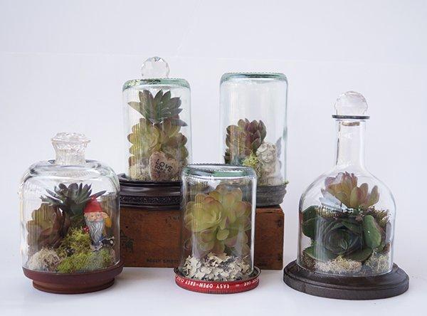 Mini Terrarien - leere Weinflaschen wiederverwenden