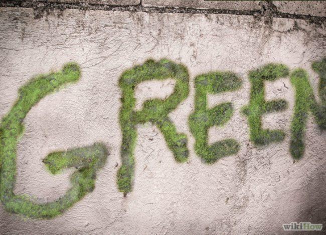 grüne Wanddeko gestalten