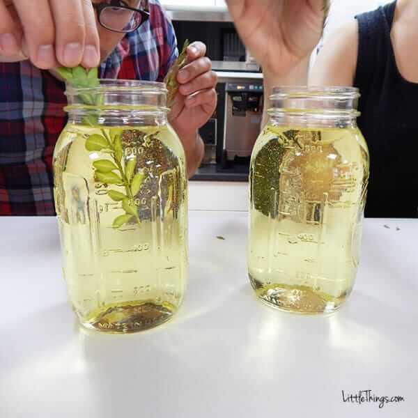 DIY Fotoeffekte-Getrocknete Blätter und Blumen-DIY Bastelidee mit Fotos