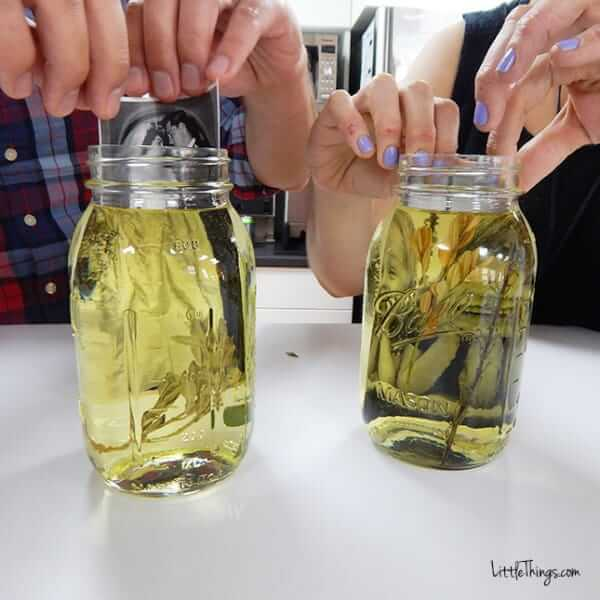 DIY Fotoeffekte-Altes Schwarz-Weiß Foto in Öl tauchen-DIY Bastelidee mit getrockneten Blättern