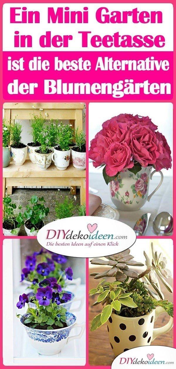 Ein Mini Garten in der Teetasse ist die beste Alternative der Blumengärten
