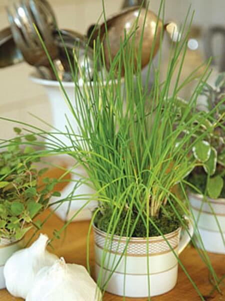 DIY Bastelideen - Mini Garten selber machen