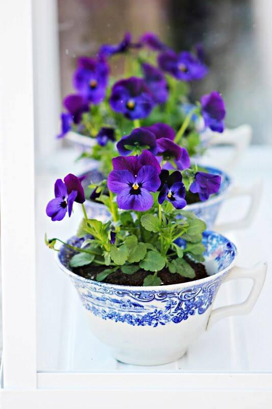 Stiefmütterchen in Tassen pflanzen- Teetassen als Deko verwenden