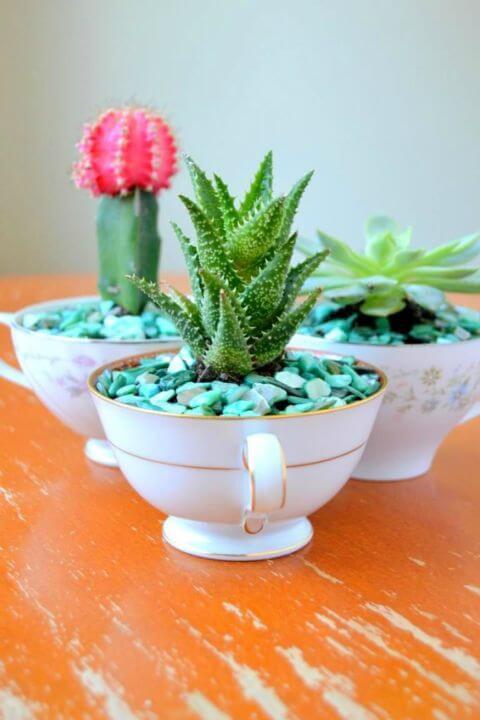 Kaktus in einer Teetasse pflanzen - DIY Ideen