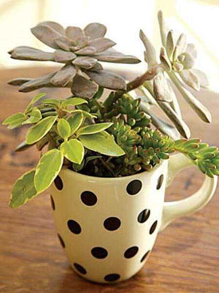 Mini-Garten in einer Teetasse gestalten