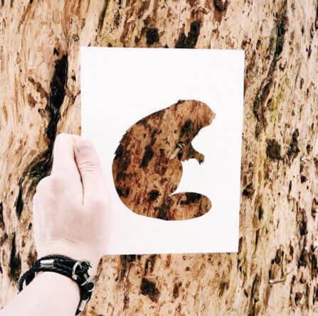 Baumrinde für DIY Kunst Bilder verwenden