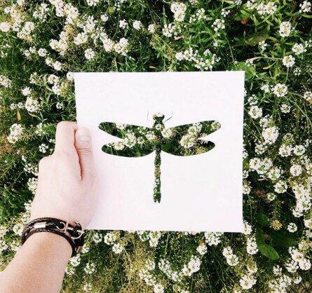 Blumenwiese für kreative Bilder nutzen