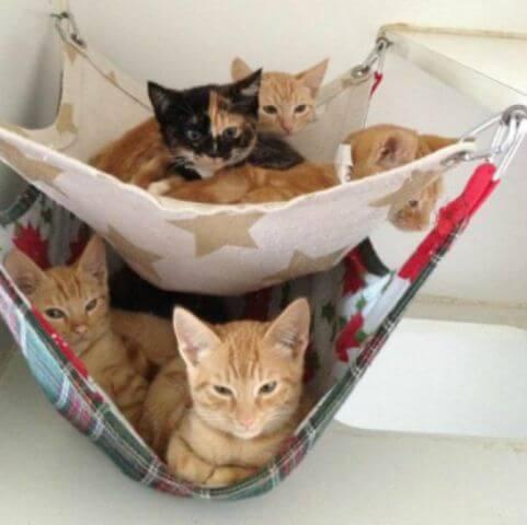 DIY Hängematte für Haustiere - Katzenbett