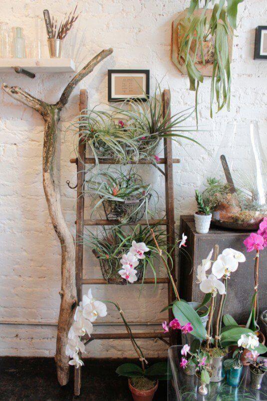 So kannst du am schönsten eine Leiter in dein Interieur einarbeiten - Pflanzen