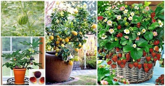 Kauf ein paar Blumentöpfe und mach eine Mini Plantage auf der Terrasse