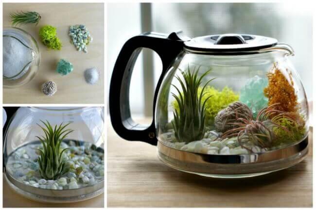 Aus einer Kaffeekanne ein Mini Terrarium gestalten - DIY Küchendeko