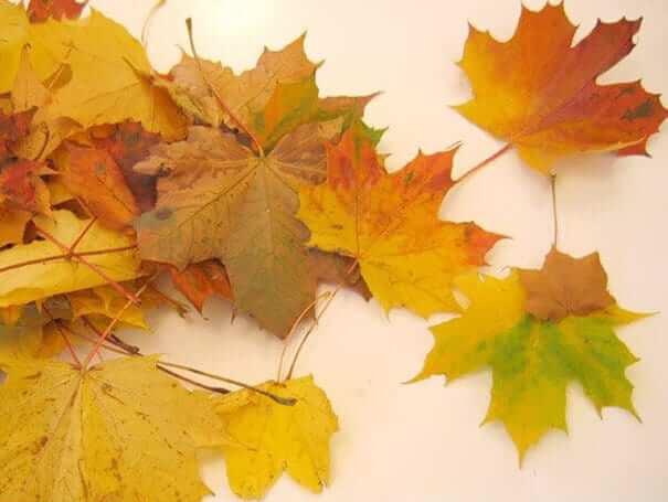 Blätter trocknen-tolle Herbstdeko zum Selbermachen