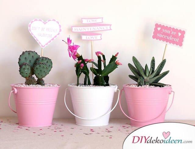 DIY Valentinstagsgeschenk - Topfpflanzen