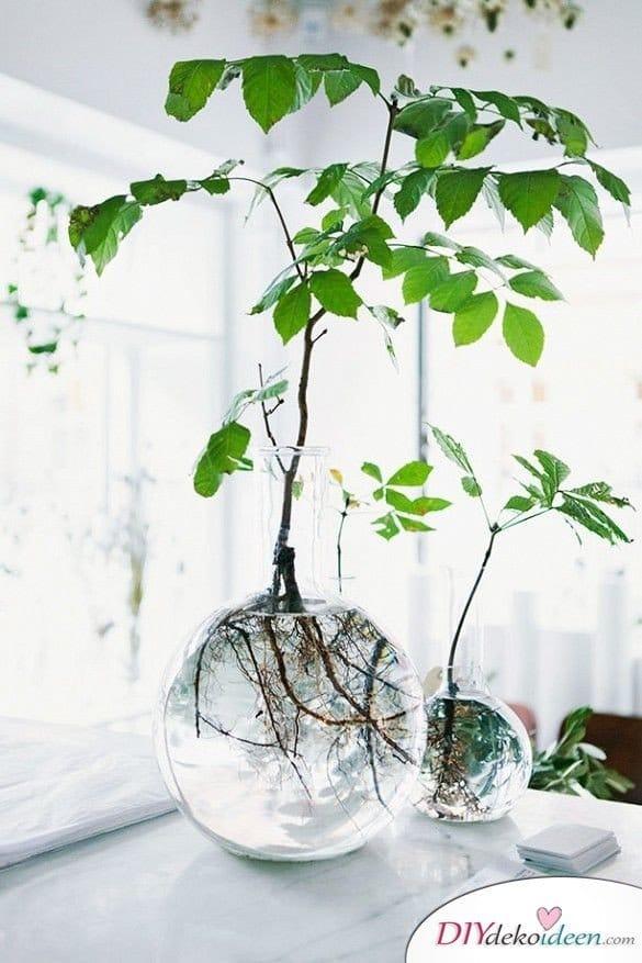 15+ DIY Bürodeko Ideen - DIY Hydropflanze