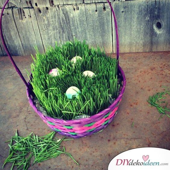 Weizengraswiese mit Eiern