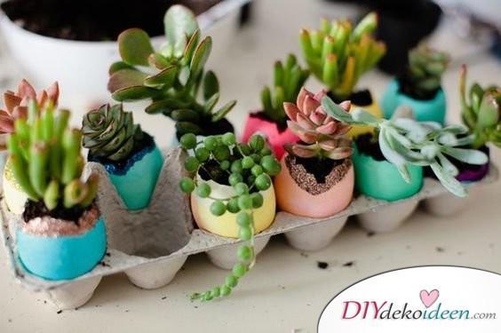Kleine Sukkulenten - Geschenkideen für Ostern