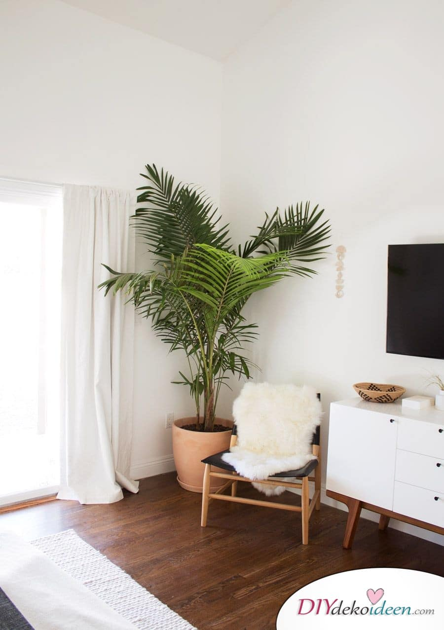 Zimmerpflanzen - schöner wohnen