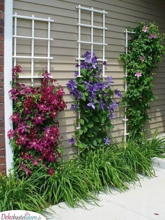 Gartengestaltung Ideen Bilder – Kletterpflanzen