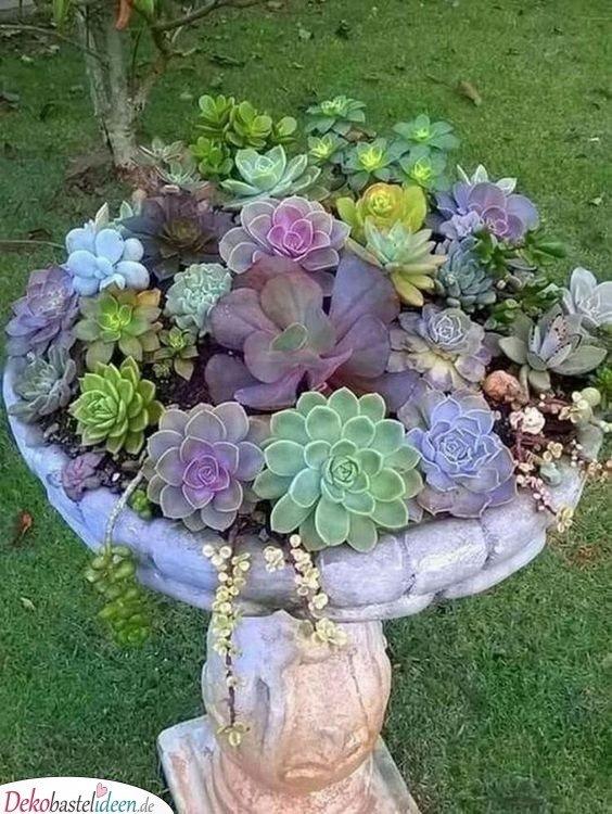 Vorgarten gestalten mit Sukkulenten