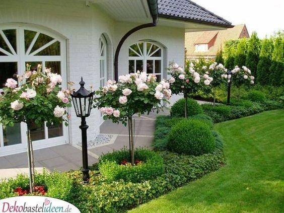 Gartengestaltung Ideen Bilder – Rosenbäume und Laternen