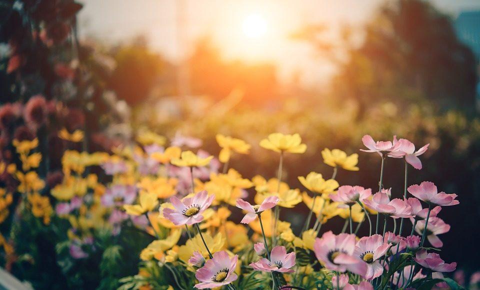 De Fondo, Hermosa, Bloom, Flor, Florales, Jardín