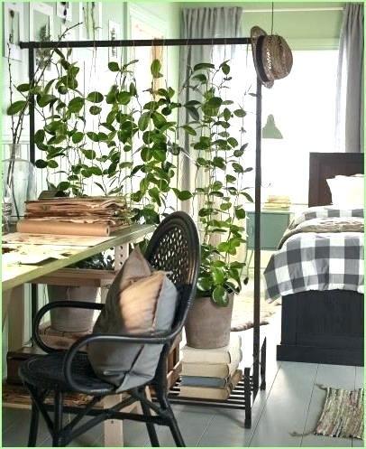 Wunderschöne Reben - Bringen Sie einen Hauch von Natur in Ihr Zuhause