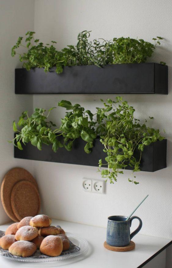 Direkt über Ihrer Küchentheke – Kräutergarten für die Küche
