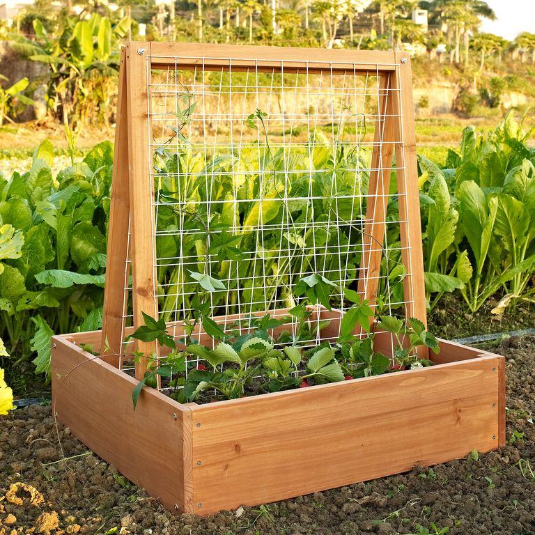 Hochbeete für den Garten – Ideal für Kletterpflanzen
