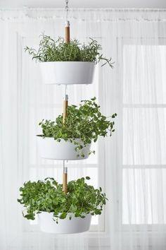 Von der Decke hängen – Indoor-Kräutergarten Ideen